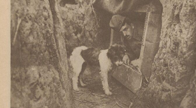 Les animaux dans la Grande Guerre  – Partie II,  Les « nuisibles », les mascottes et les autres animaux dans le conflit, vus par leurs contemporains français